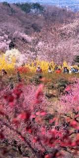 fukushimakankou_photo03.jpg